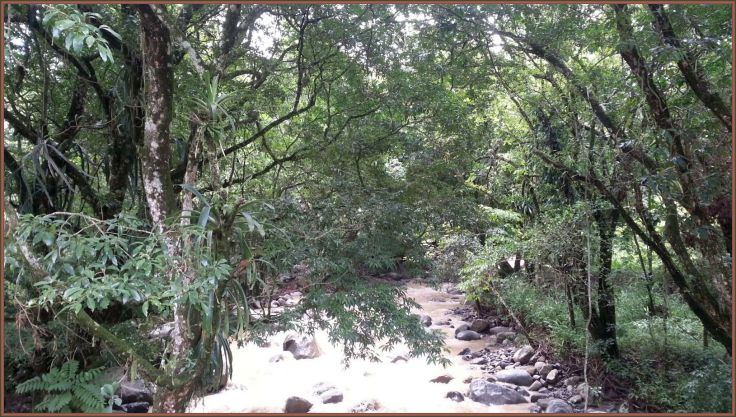 riverPalmichal