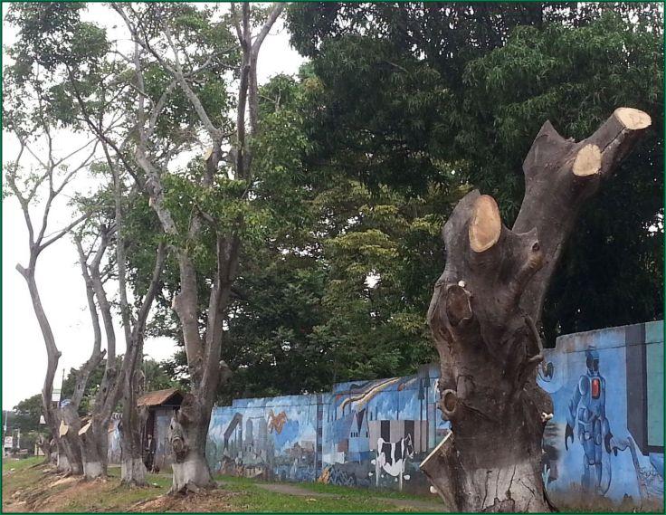 TreesCut