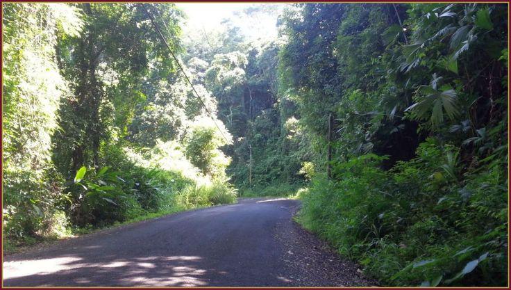 Road_Bijagual3.jpg