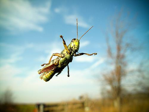 GrasshopperJumping