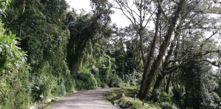 Route417_Road.jpg
