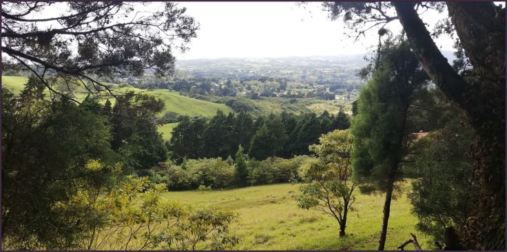 Views1