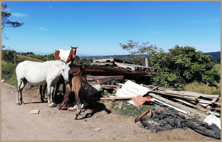 HorsesCarrots