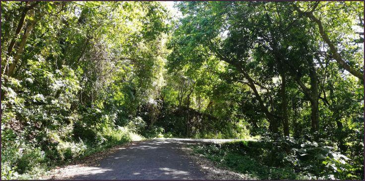 Rt707_road