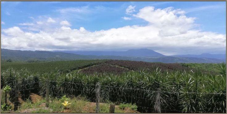 farmsSarapiqui