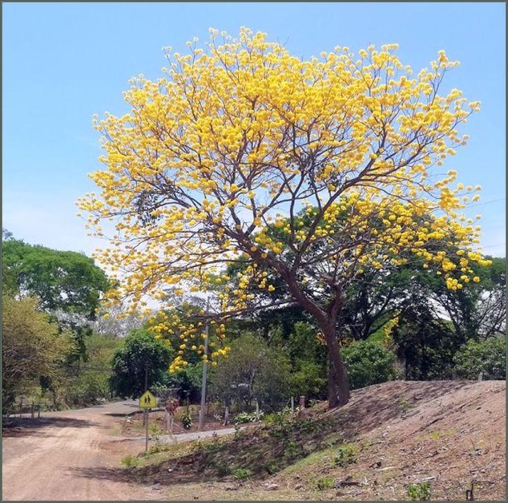 CortezAmarillo