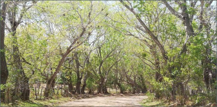 TreesRoad