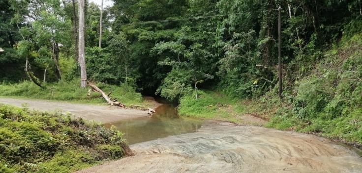 CreekDrake