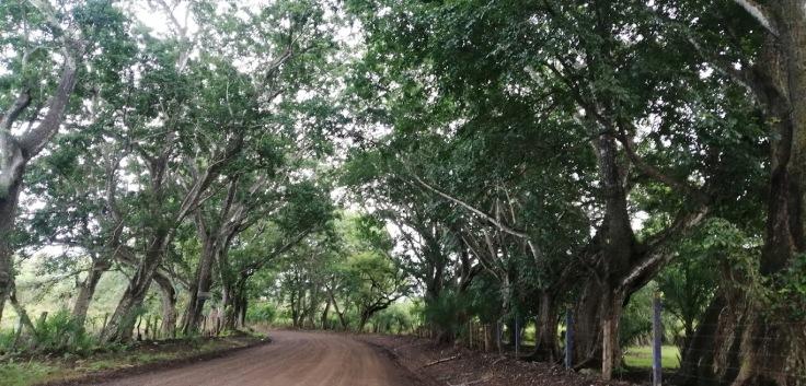 GuacalilloRoad