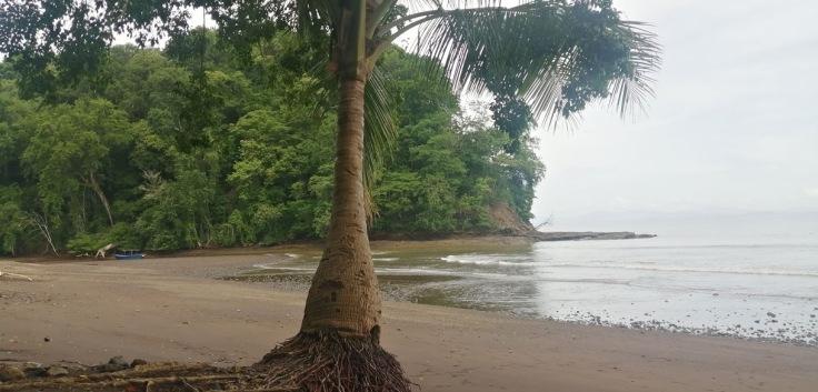 PlayaAgujas